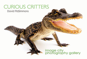 Curious Critters Showcard - FitzSimmons